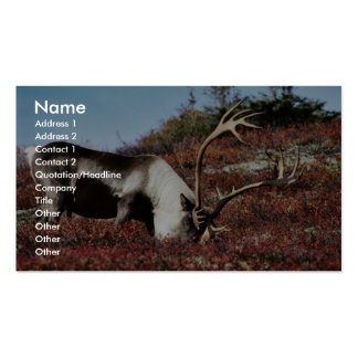 Caribou feeding business cards