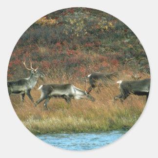 Caribou herd at tundra waterhole round sticker
