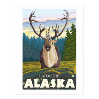 Caribou in the Wild - Latouche, Alaska Postcard
