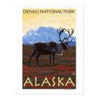 Caribou Scene - Denali National Park, Alaska Postcard