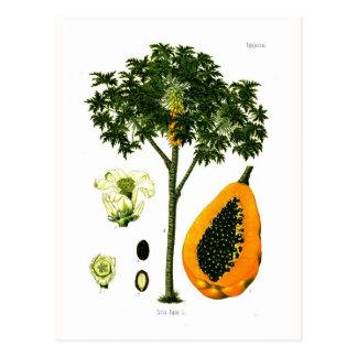 Carica papaya (Papaya) Postcard