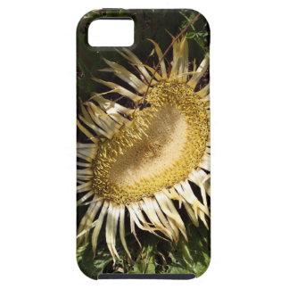 Carline thistle (Carlina acanthifolia) iPhone 5 Cases