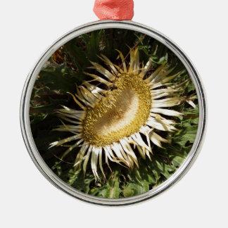 Carline thistle (Carlina acanthifolia) Silver-Colored Round Ornament