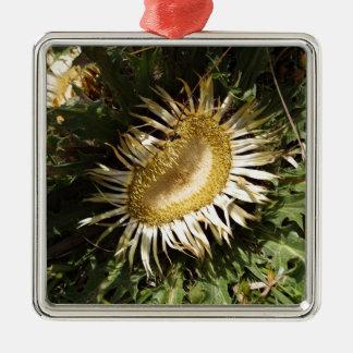 Carline thistle (Carlina acanthifolia) Silver-Colored Square Ornament