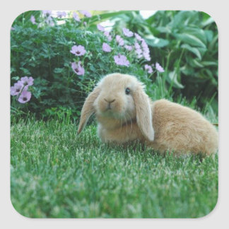 Carlos the Lop Eared Baby Bunny Square Sticker