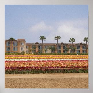 Carlsbad Flower Field Poster