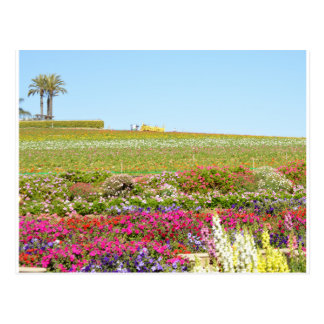 Carlsbad Flower Fields Postcard