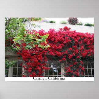 Carmel in bloom poster