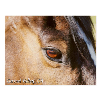 Carmel Valley Horse Eye Postcard