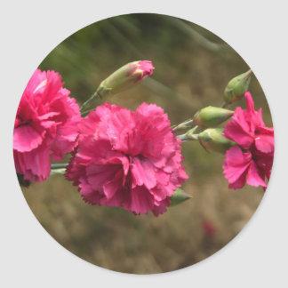 carnation classic round sticker