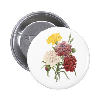 carnation Dianthus sp by Redouté Pin
