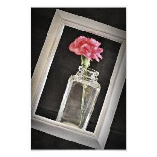 Carnation Framed Photo Print