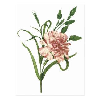 Carnation Postcard