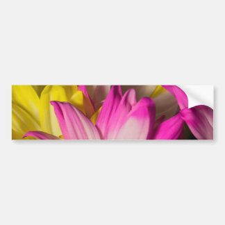 Carnations Bumper Sticker