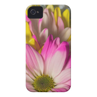 Carnations iPhone 4 Covers