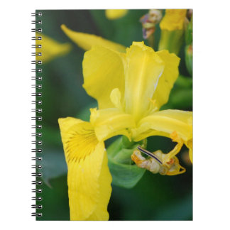 Carnet d'iris jaune