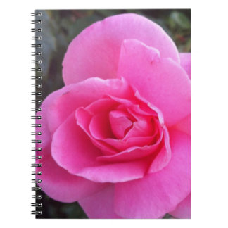 Carnet - rose de rose