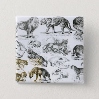 Carnivorous Animals 2 Inch Square Button