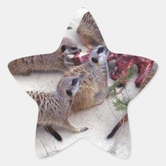 Carnivorous_Meerkats,_ Star Sticker