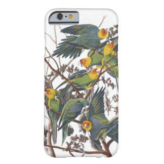 Carolina Parakeet Barely There iPhone 6 Case