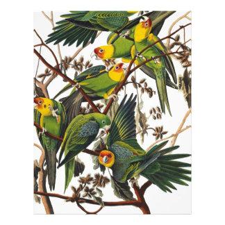 Carolina Parrot - John James Audubon (1827-1838) Letterhead