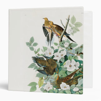 Carolina Turtle Dove, Birds of America by John Jam 3 Ring Binders