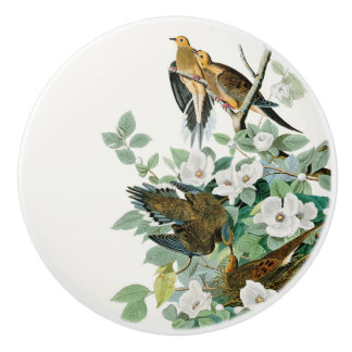 Carolina Turtle Dove, Birds of America by John Jam Ceramic Knob