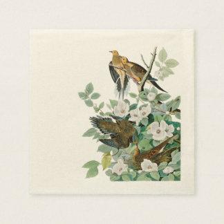 Carolina Turtle Dove, Birds of America by John Jam Napkin