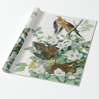 Carolina Turtle Dove, Birds of America by John Jam Wrapping Paper