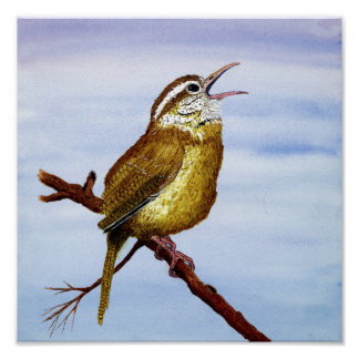 Carolina Wren Art Poster
