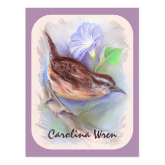 Carolina Wren with Morning Glory Flowers Postcard