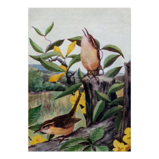 Carolina Wrens and Yellow Jessamine Poster