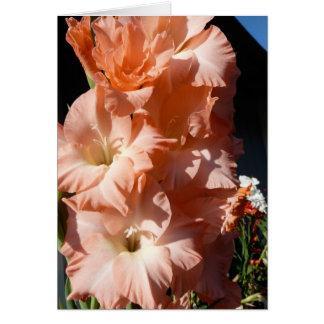 Carol's Gladiola Sympathy Card