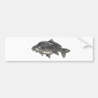 Carp Fishing Bumper Sticker