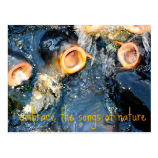Carp Trio embrace the songs of nature Postcard