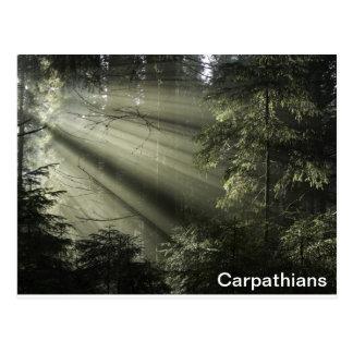 Carpathians mystic forest postcard