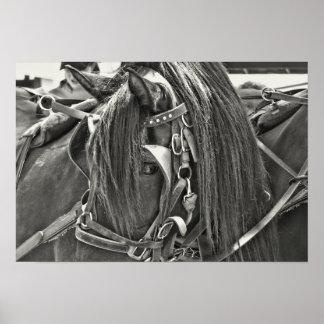 CARRIAGE HORSE 19x13 Print
