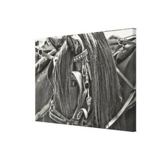 CARRIAGE HORSE 24 x 16 Canvas Print