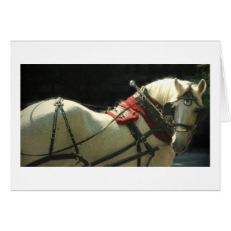 Carriage Horse Card