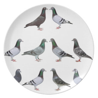 Carrier pigeons champions plate