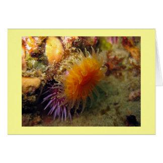 Carte Corail orange de tasse
