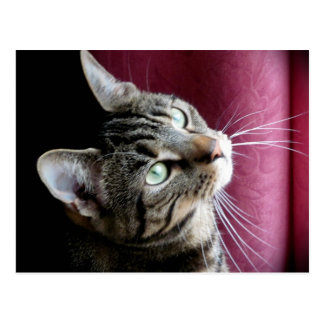 Carte de note de chat tigré carte postale