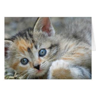 Carte de note de chaton