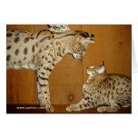 Carte de réunion de chat de la savane