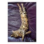 Carte de sommeil de chat de la savane