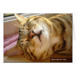 Carte de sommeil profond de chat de la savane