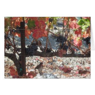 Carte de thanksgiving : Colibri dans le vignoble