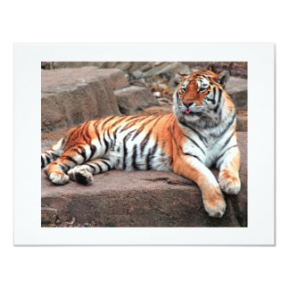 Carte de tigre carton d'invitation 10,79 cm x 13,97 cm