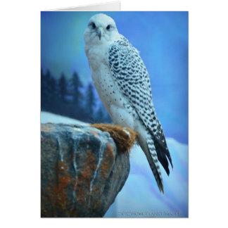 Carte de voeux Artic de faucon