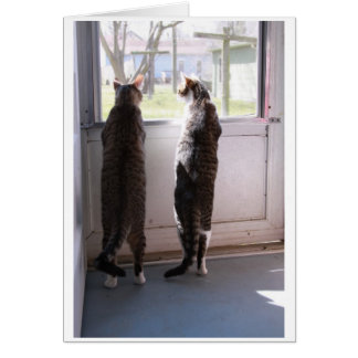 Carte de voeux avec des chats